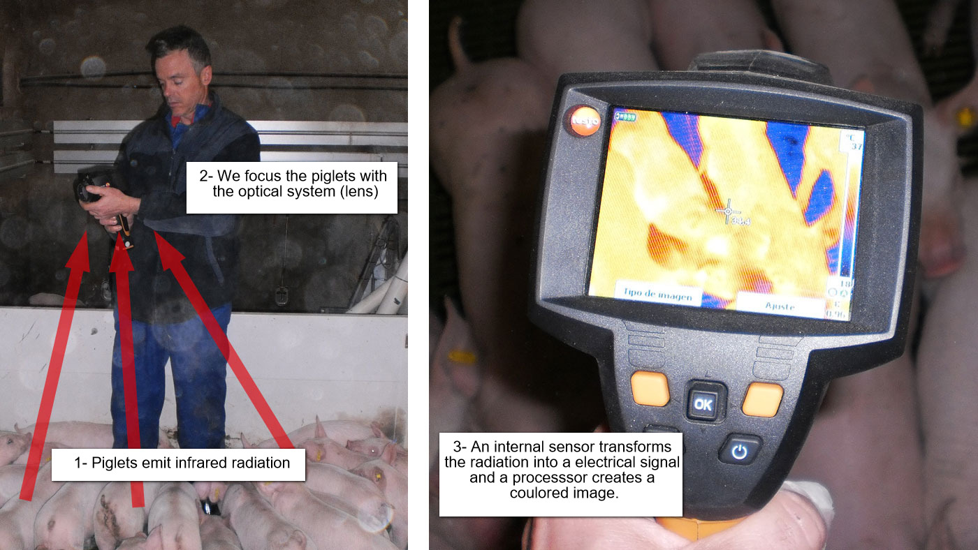 How does a thermographic camera work?